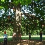 Trees 3 - Copy